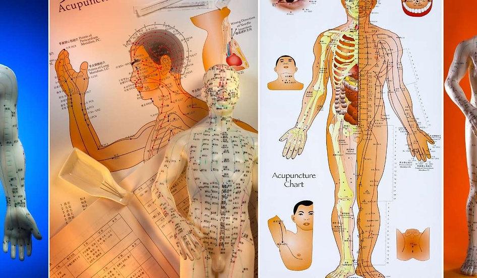 Mapas do corpo humano utilizados na auriculoterapia