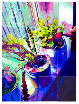 Crassula & Epiphyllum anguliger - Gouache Painting