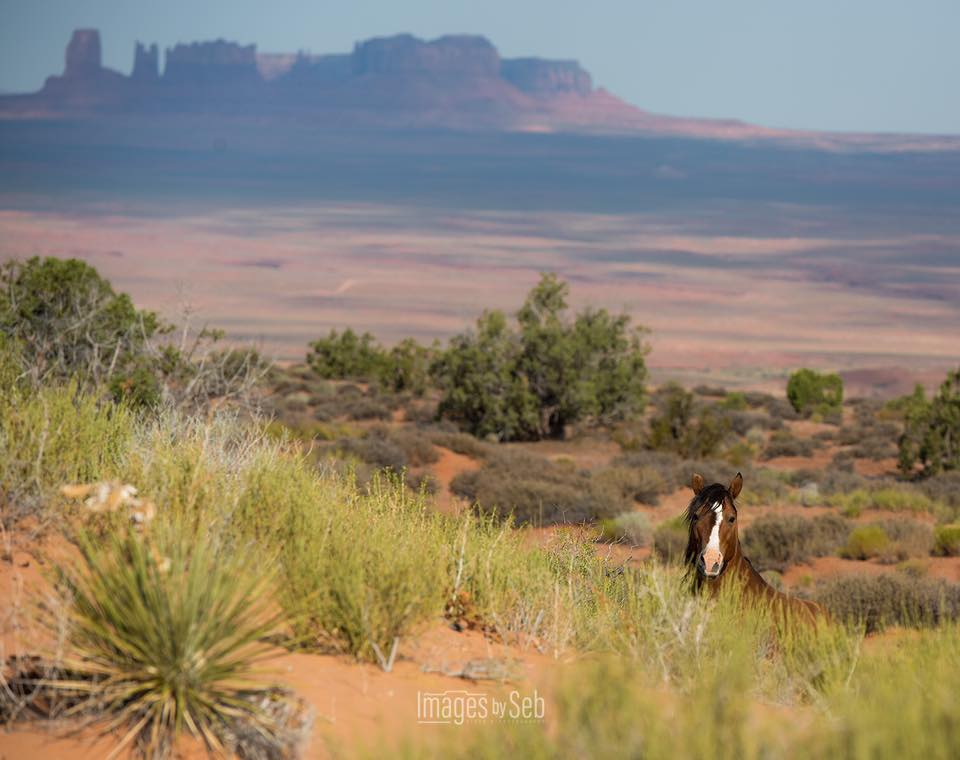 Monument Valley3054_10213819323619716_6221475268618