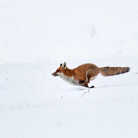 Home-Wild im Winter 21