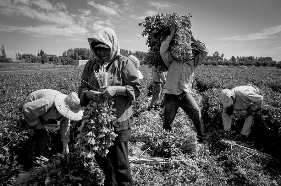 Agricultoremigrante-05.jpg