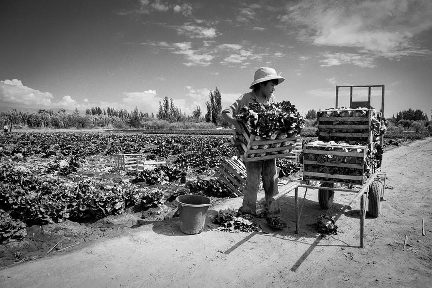 Agricultoremigrante-14.jpg
