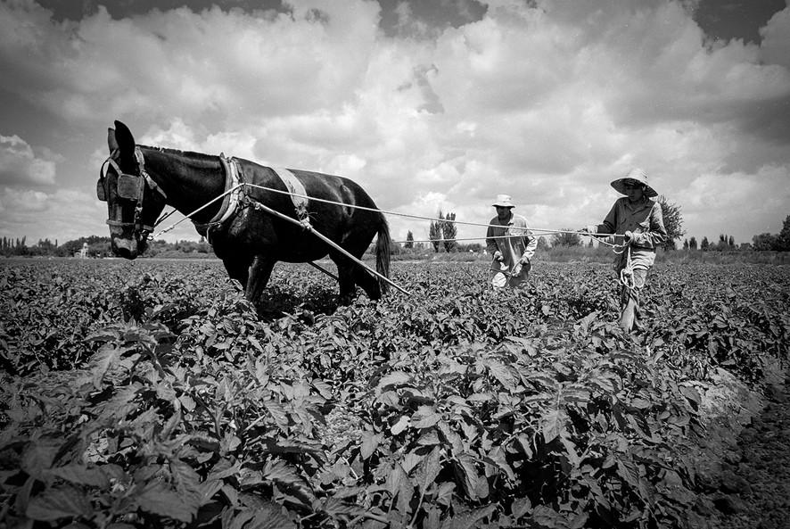 Agricultoremigrante-01.jpg