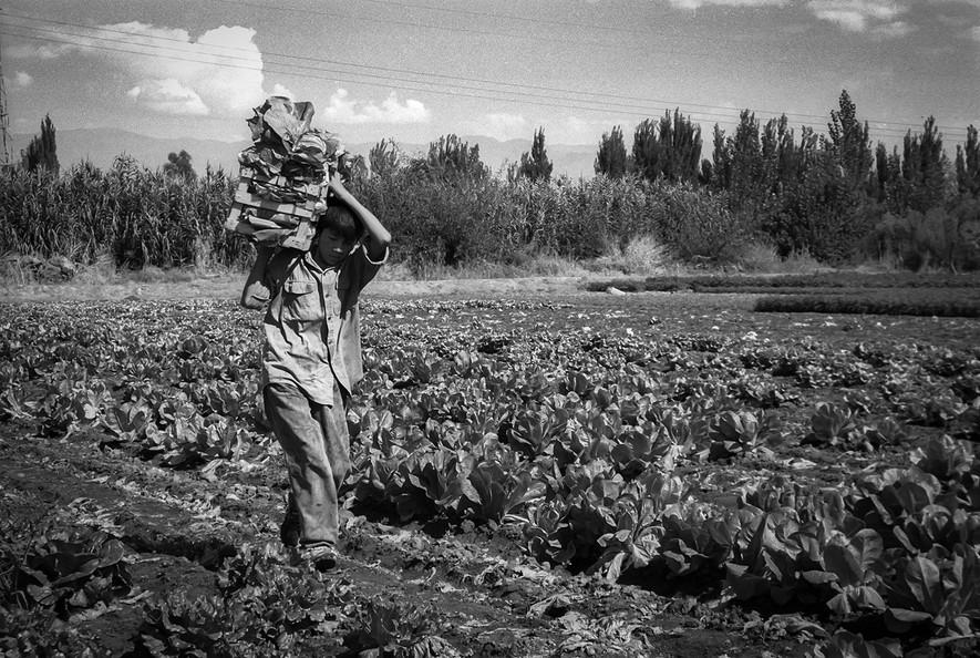 Agricultoremigrante-12.jpg
