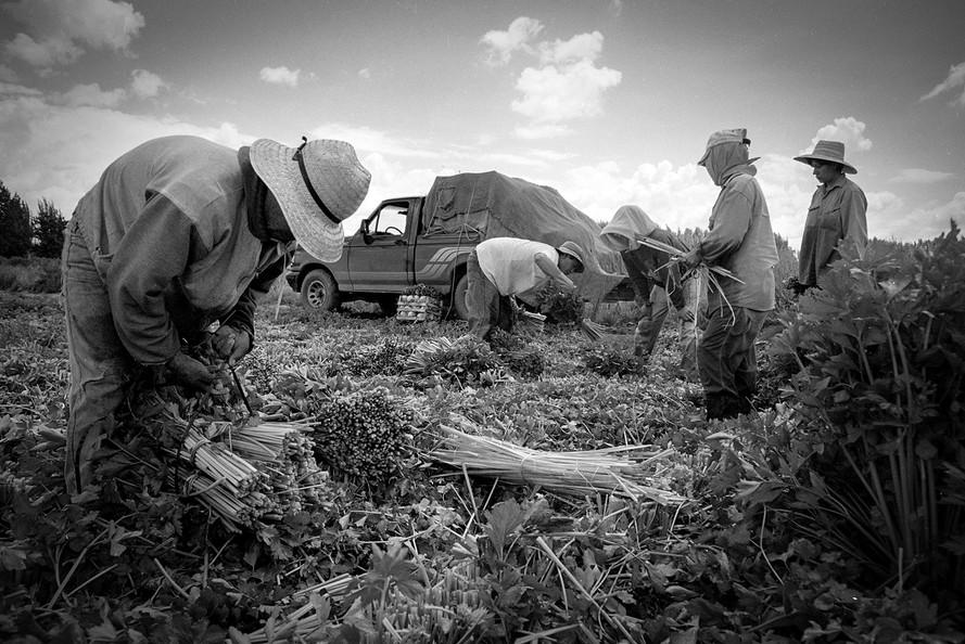 Agricultoremigrante-04.jpg