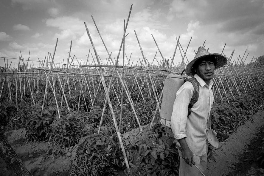 Agricultoremigrante-06.jpg