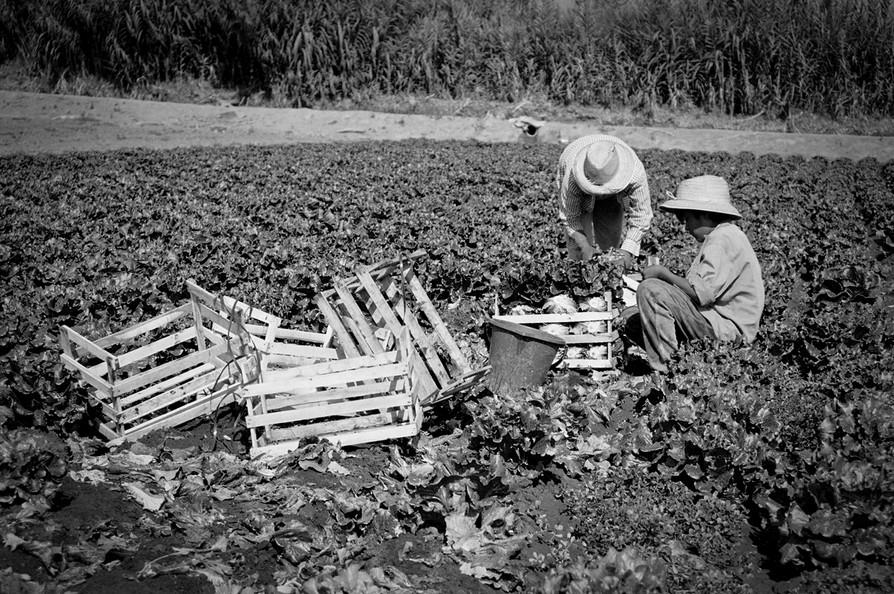 Agricultoremigrante-09.jpg