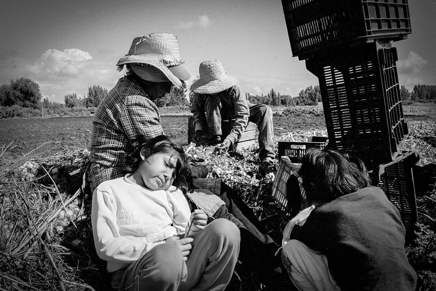 Agricultoremigrante-10.jpg