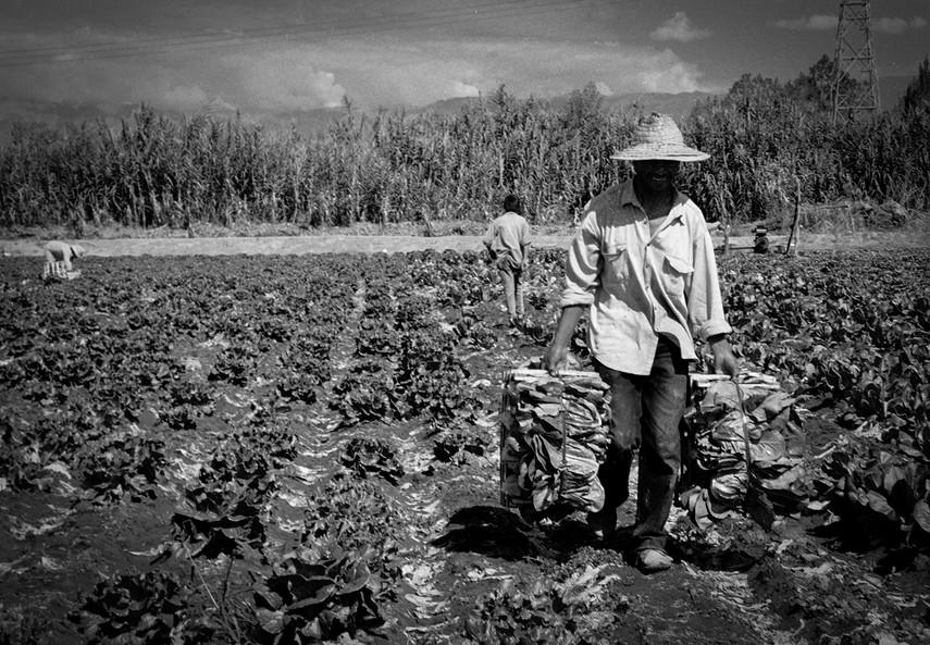 Agricultoremigrante-08.jpg