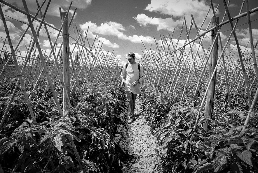 Agricultoremigrante-11.jpg