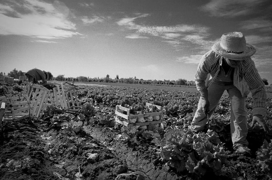 Agricultoremigrante-02.jpg