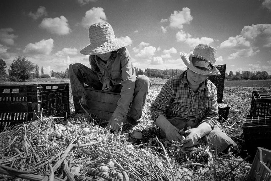 Agricultoremigrante-07.jpg