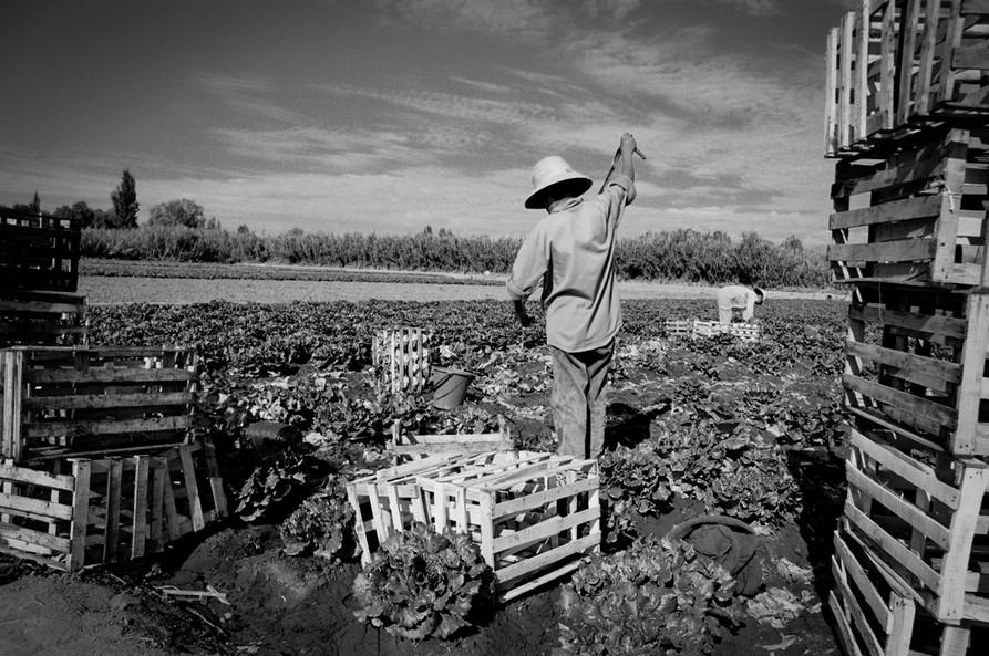 Agricultoremigrante-13.jpg