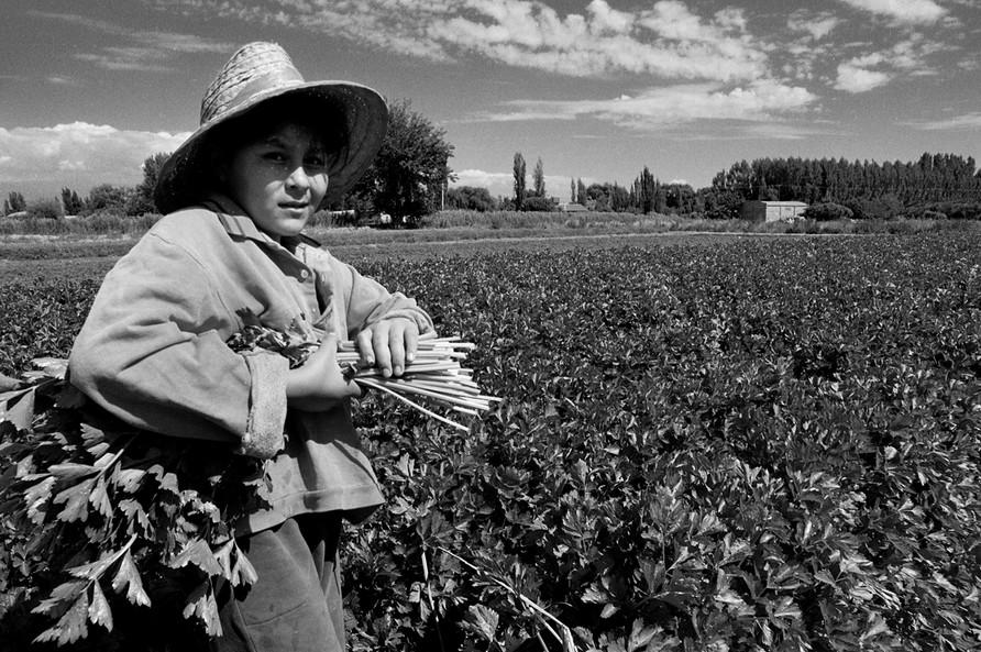 Agricultoremigrante-03.jpg