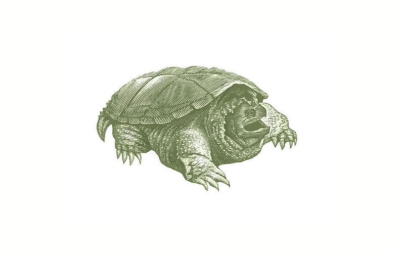Snapping_Turtle.jpg