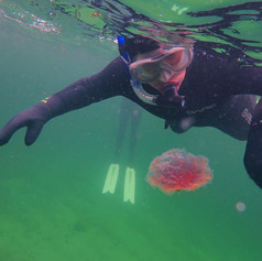 Checking out a jelly!