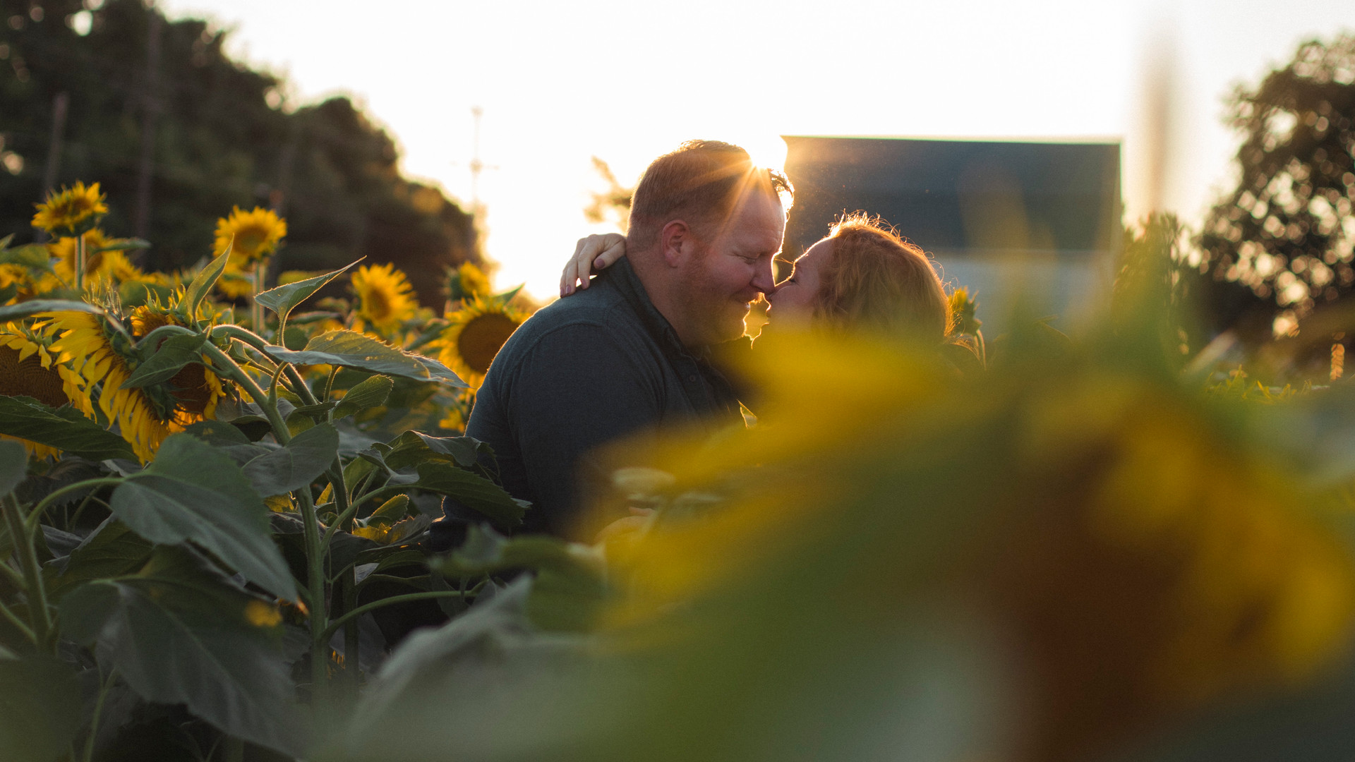 Jennifer Schaefer Photography-Harford County-Maryland-Photographer-Sunflowers-Maternity