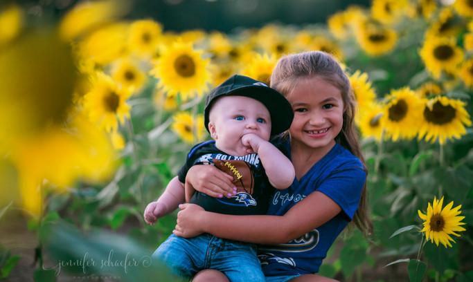 sunflower minis-sunflowers-harford county sunflowers-maryland sunflowers-JSP