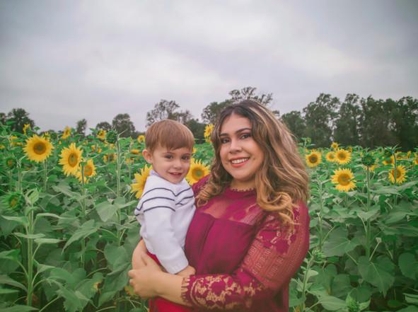 sunflowers-sunflower minis-harford county sunflowers-maryland sunflowers-JSP