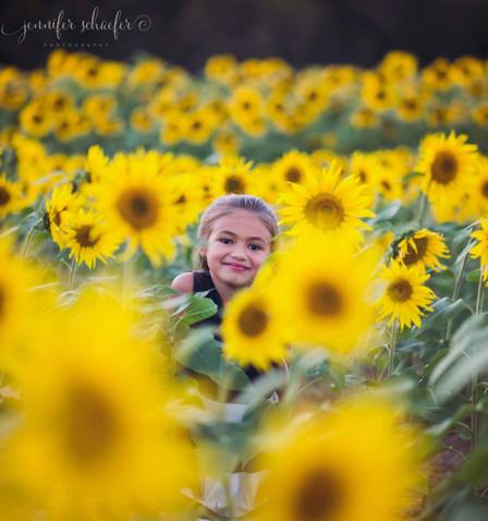 sunflowers-sunflower photos-harford county-maryland sunflowers-Jennifer Schaefer Photography