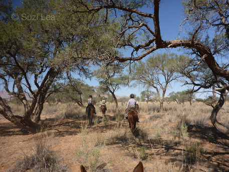 Dry water courses Namib Desert