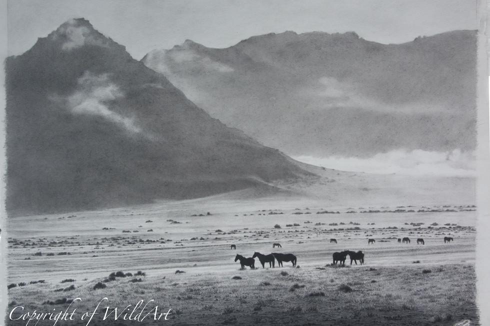 Horses at Dawn watermarked.jpg