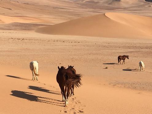 Loose Horses/Cheryl Buxton