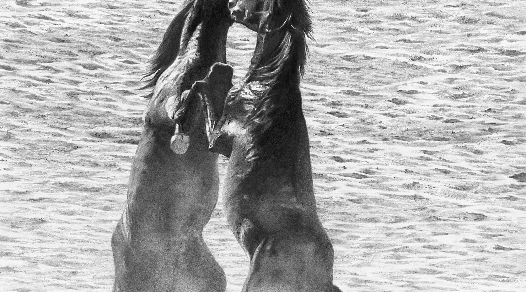 Stallions Rearing.jpg