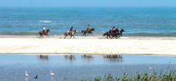 Gallop on the beach Swakopmund