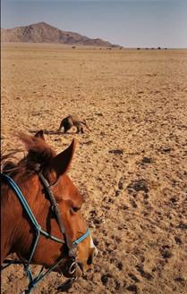 Only in the Namib, Izzy Crane