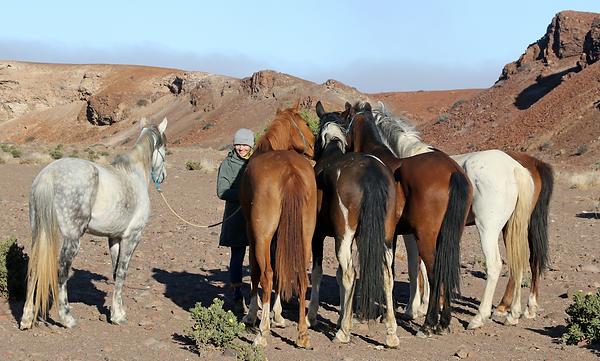desert horses.png