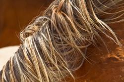 Namibia Wild Horses, mane