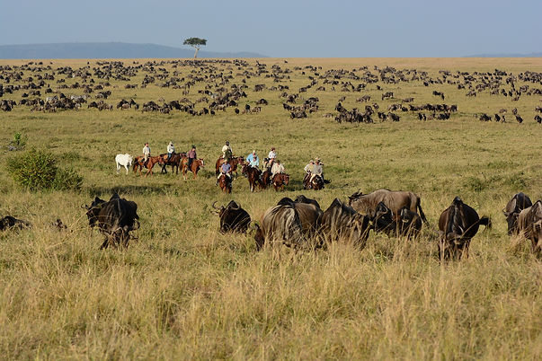 21 Miles of wildebeest.JPG