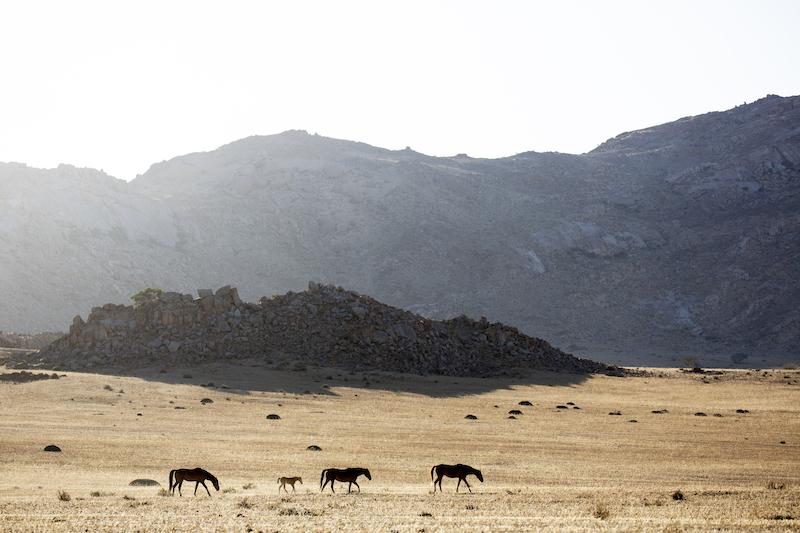 Namibia Wild Horses, near Garub