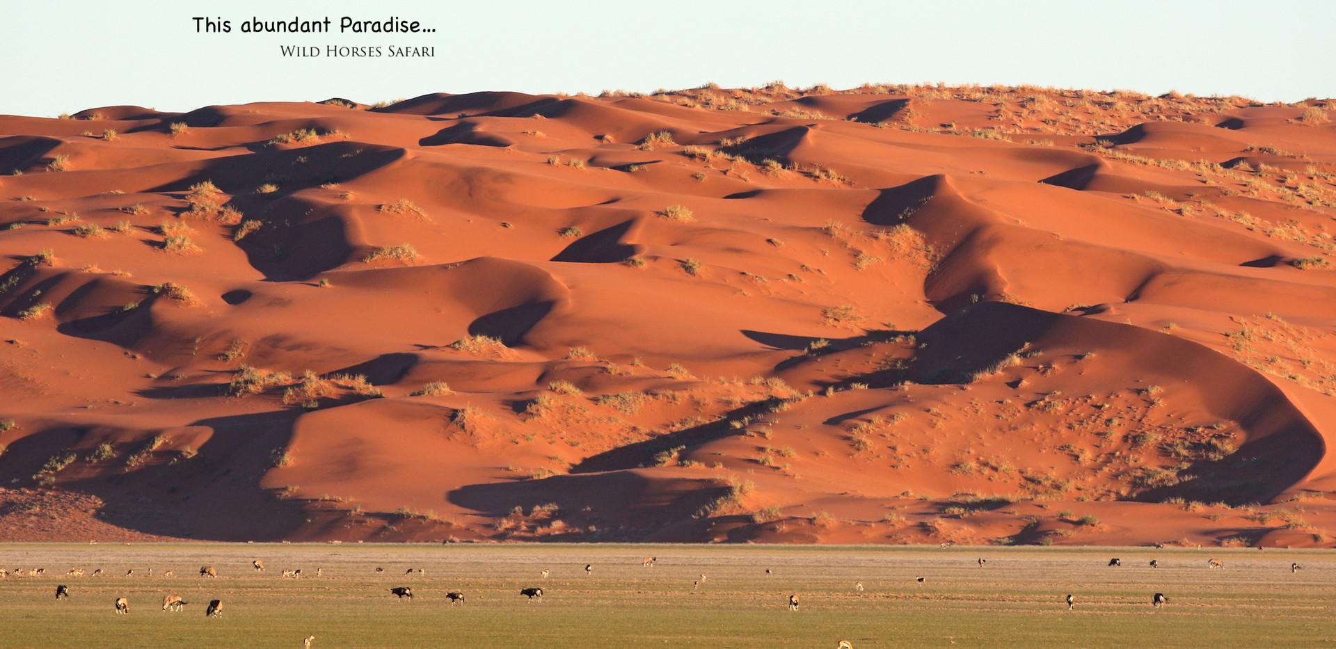 Namib Paradise