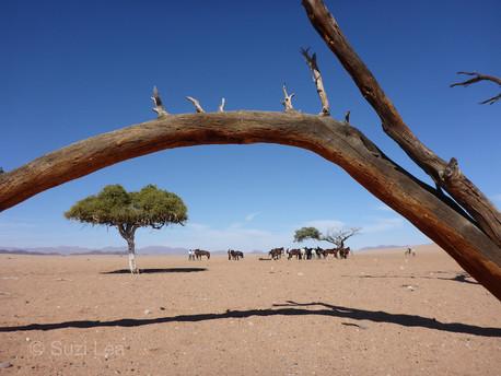 Typically Namib Desert, Susi Lea
