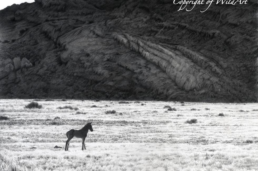 Solitary Foal.jpg