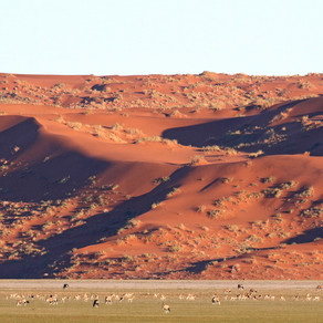Vegetated Dunes - sleeping giants of the Namib dune sea