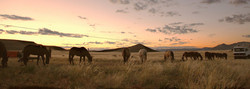 Namib Desert Safari