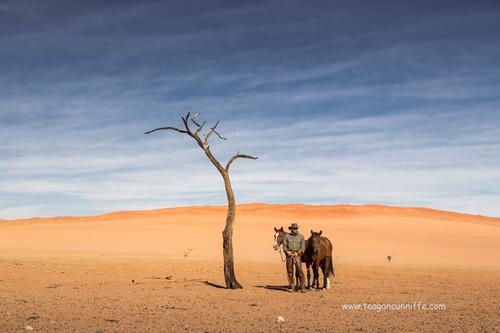Lone Tree, Wild Horses Safari, Teagan Cunnliffe