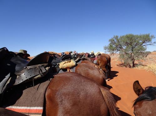 Bums in a row, Wild Horses Safari, Ian Asherwood
