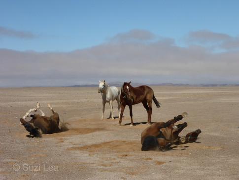 Horses enjoying a roll, fog rolling Suzi Lea
