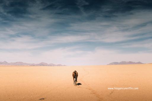 Lone Horse, Wild Horses Safari, Teagan Cunnliffe
