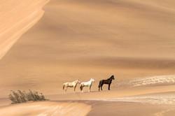 Namib Desert Safari loose horses