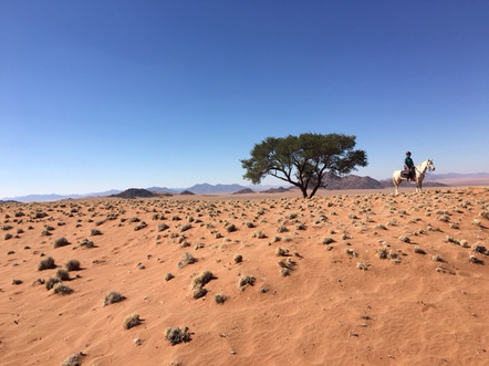 Lone Horse, lone tree, Epic Safari 2016, Cheryl Buxton