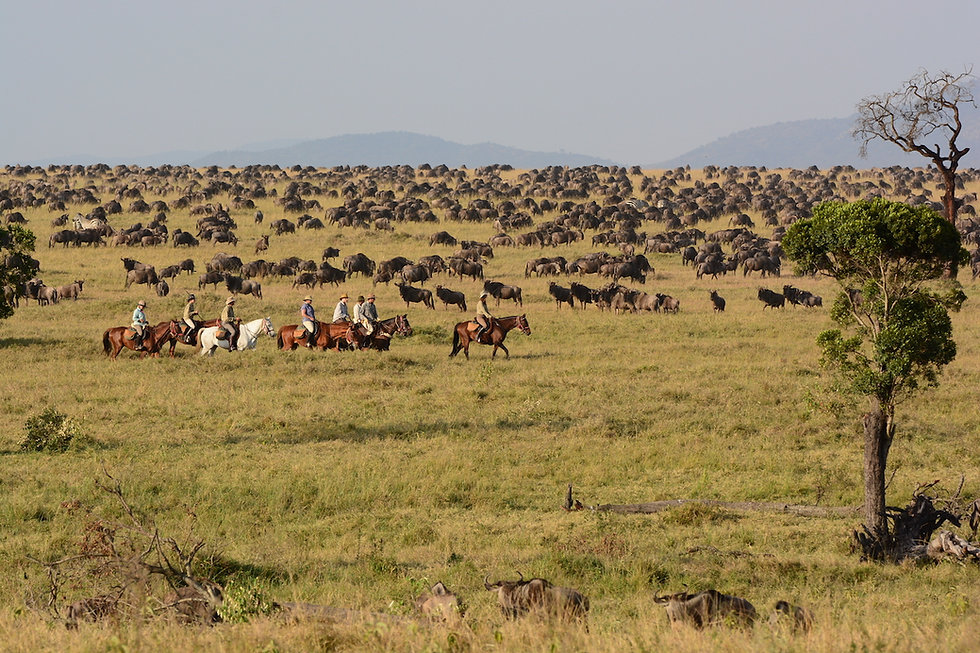 5 Wildebeest migration.JPG