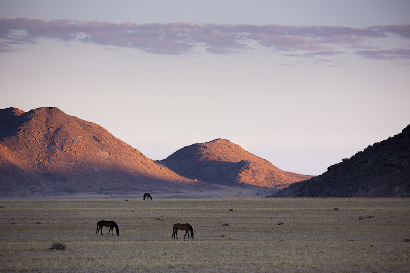 Namibia Wild Horses, sunset