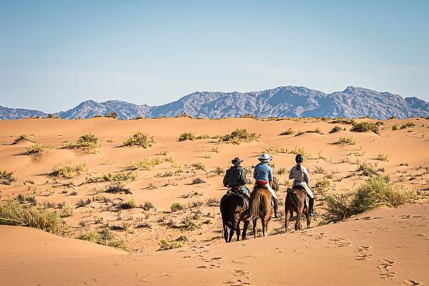 wild horses dunes.jpg