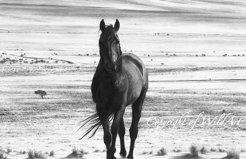 Stallion on the Plains.jpg