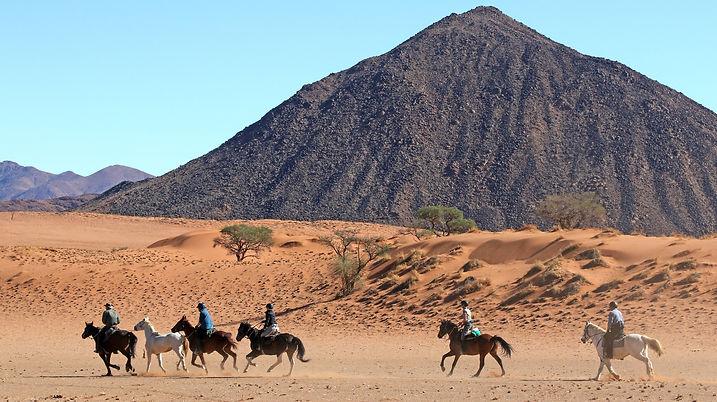 Wild Horses Black Mnt.JPG